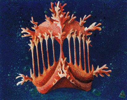 Coral Helm
