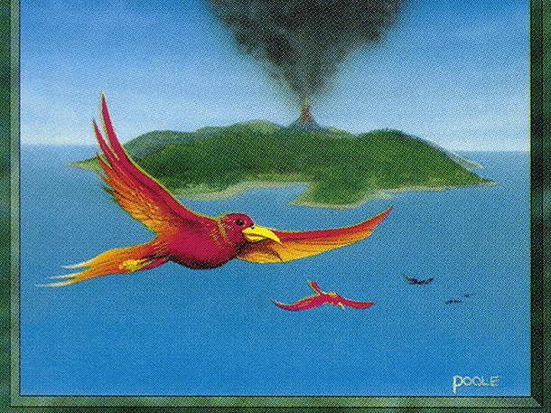 Birds of Paradise (IE)