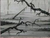 Swamp (C) (CE)