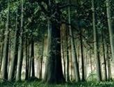 Forest (30) (Elves vs Goblins)