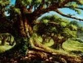 Forest (31) (Elves vs Goblins)