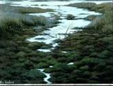 Swamp - Lake District National Park