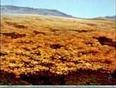 Plains - Steppe Tundra