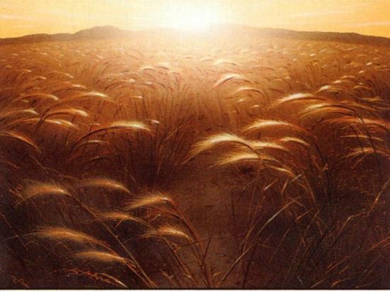 Plains (132)