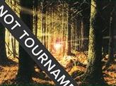 Forest (347) - 2004 Julien Nuijten (8ED)