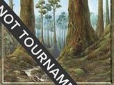 Forest (349) - 2001 Jan Tomcani (MMQ)