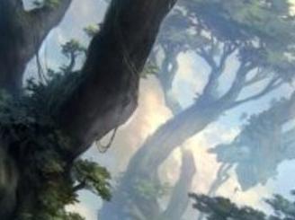 Forest Art Card (19/81)