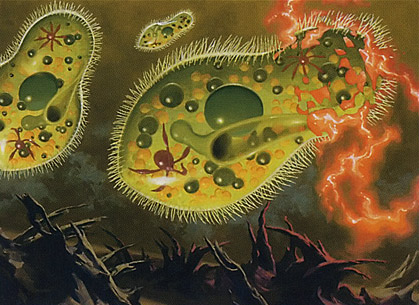 Chronozoa