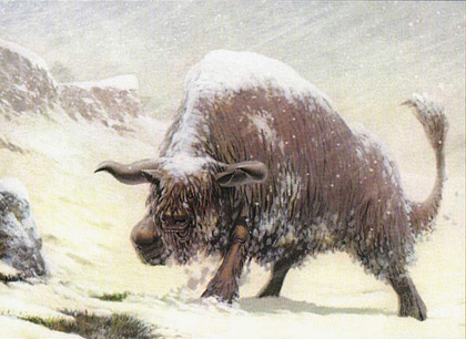Bull Aurochs