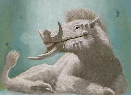 Woolly Razorback