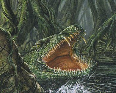 Rootwater Alligator