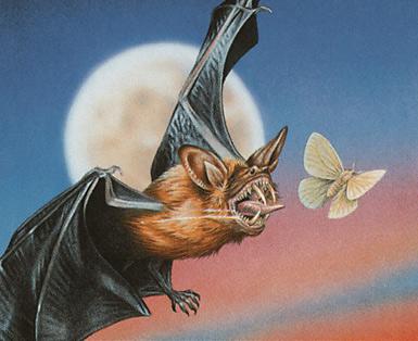 Dakmor Bat