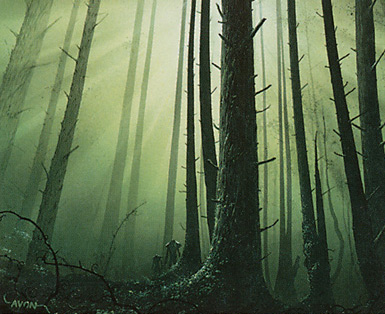 Forest (347)