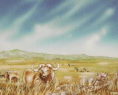 Plains (Buffalo)