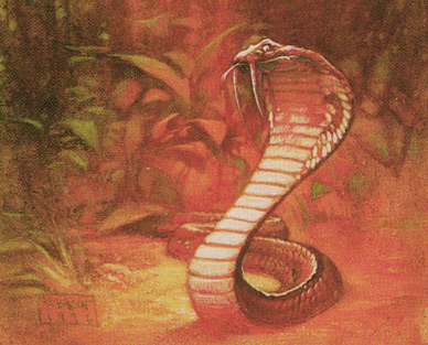 Sabertooth Cobra