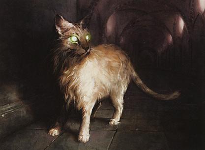 Sanctuary Cat
