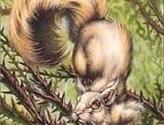 Squirrel Token (Odyssey)