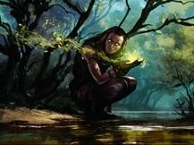 Primal Druid