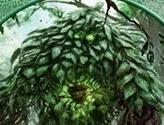 Elemental Token (Green)